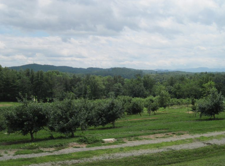 Hendersonville NC Apple Orchard