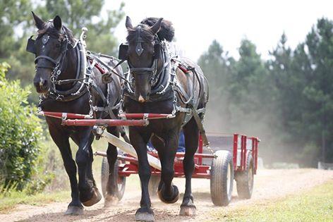 horsedrawn-hayride