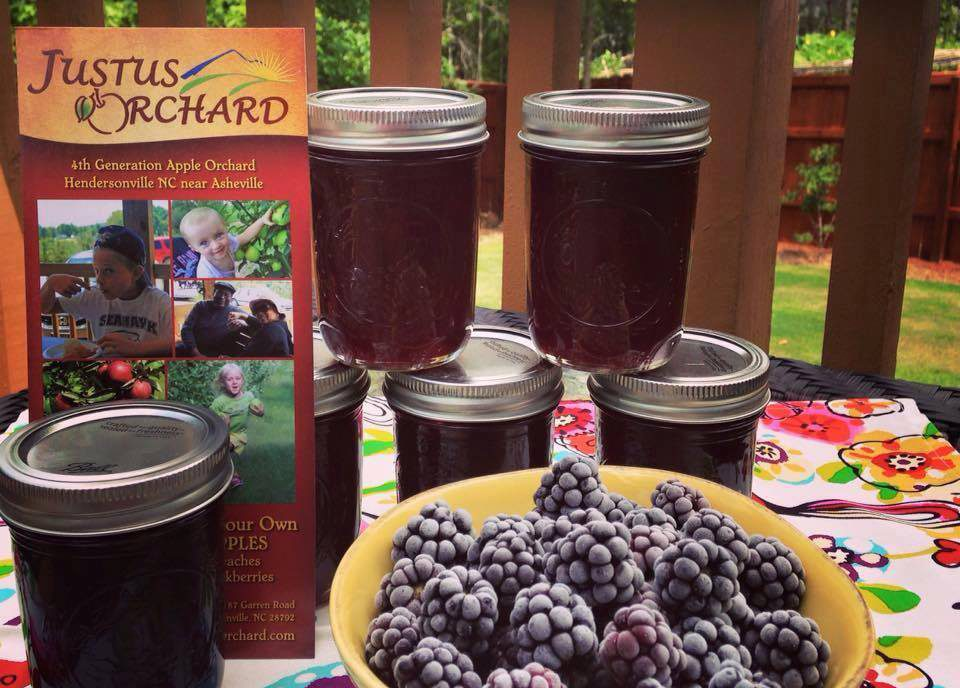 Hendersonville-U-Pick-Blackberries